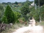 road to the trulli bianchi