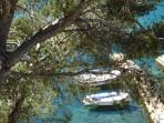 Local boats and pines