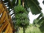 Bananas and other fruits grow year round. Help your self when in season.