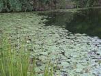 The spring fed dam