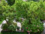 il giardino dall'alto