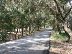 Quiet orange groves for cycling