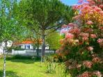 Maritime pine garden
