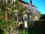 The cottage covered by Wisteria in Spring