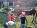 children playing on the farm