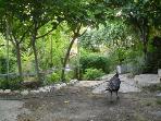 garden with bird