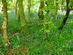 enjoy a woodland walk