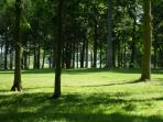 Kenwick Woods