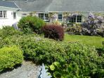 Mature bushes and wisteria in front garden