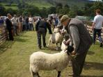 Rosedale Show