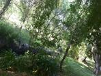 road river -garden