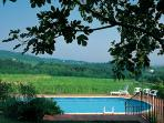 Swimming pool with view on the vineyard