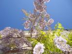 The front garden Gite la Rosa