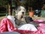 Enjoying the sun. Well-behaved dogs welcome!