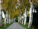 One of the amazing tree lined roads  into the village typical of this area.