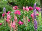Le Boucharel, Champagnac le Vieux, #Haute Loire, Summer #Garden Flowers, #Fleurs du jardin.