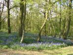 Take a relaxing country stroll in the local woodland area