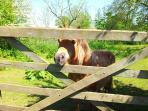 Dinky the pony