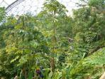 Inside the Tropical Bi-ome at Eden Project