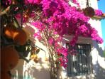 Vibrant oleander at the door of Casa Limones.