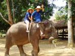 Elephant bareback riding exclusive programs
