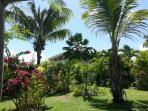 Jardin tropical luxuriant ...