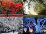 Westonbirt Arboretum. Autumn is wonderful but incredibly popular you'll be enchanted all year round.