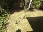 Lunchtime visitors to the lodge