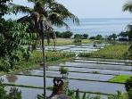 view into rice paddies from dining terrace