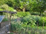 Kitchen garden at side of house