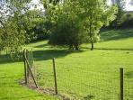 Back fields in summer