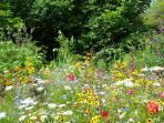 The Pictorial Meadow, a riot of colour May to November