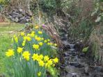 The garden brook, looking upstream