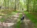 Rolly going for his morning stroll in the woods