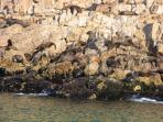 Seals on the Robberg