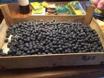 Locally grown blueberries dropped off by a passing farmer. Delicious