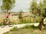 TUSCANY FOREVER BIKE RENTAL - NEW , TOP BRAND