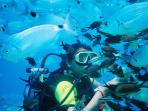 Explore Underwater with Scuba diving