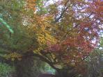 Stunning in autumn, walks by the river Coquet in Warkworth