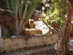 The garden around the villa
