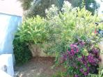 Little garden with rosemary plant