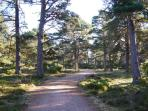 Explore the Caledonian forest on our doorstep with trails for a short stroll or all day exploring