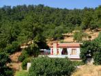 Fig Tree Villa