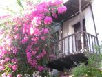 Houses covered with Bougainvillea line the cobbled streets