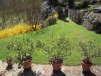 Villa Caprera. The back garden