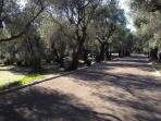 Property is located next to the park with olive trees