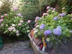Giardino fiorito a due passi da trastevere e san Pietro