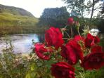 Roses on the riverbank