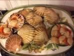 Local hand dived scallops - Oban 'Seafood Capital of Scotland'