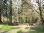 Bacton woods, with picnic spots and waymarked walks, near our holiday caravan park.